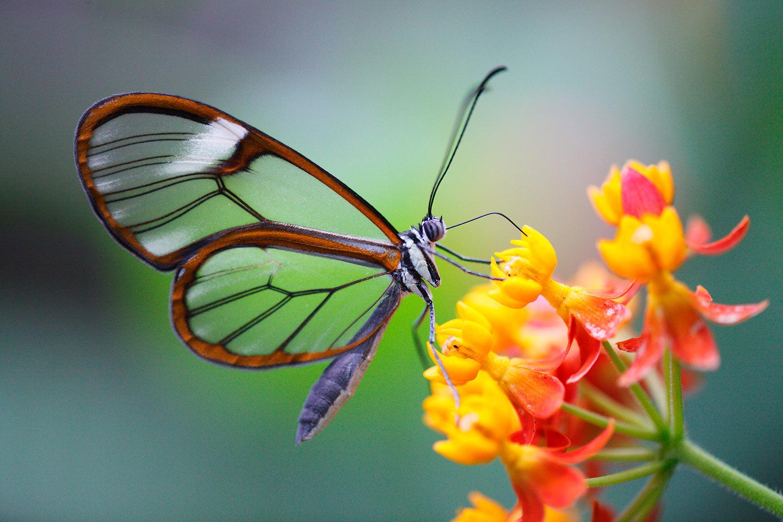 Das Schmetterlingsprogramm | wirknet © Norbert Liesz www.norlies.de.